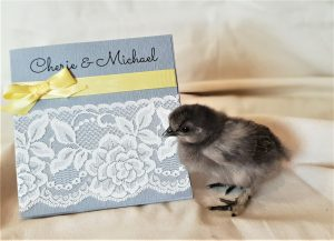 Simply-Stunning-Stationery-Wedding-Invitations-Chicken
